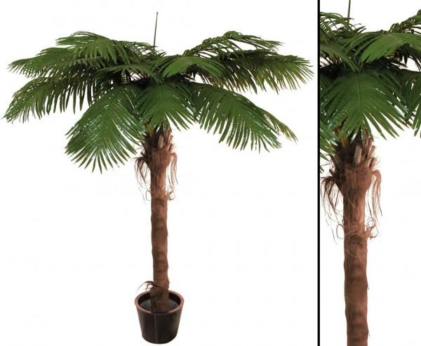 Phönixpalme mit 10 Wedel Palmfaserstamm 270cm