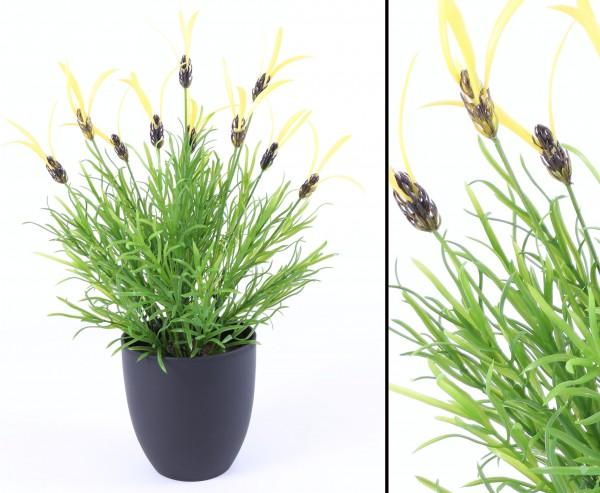 Gewürz Kunstpflanze Lattich aus PE mit Topf 44cm