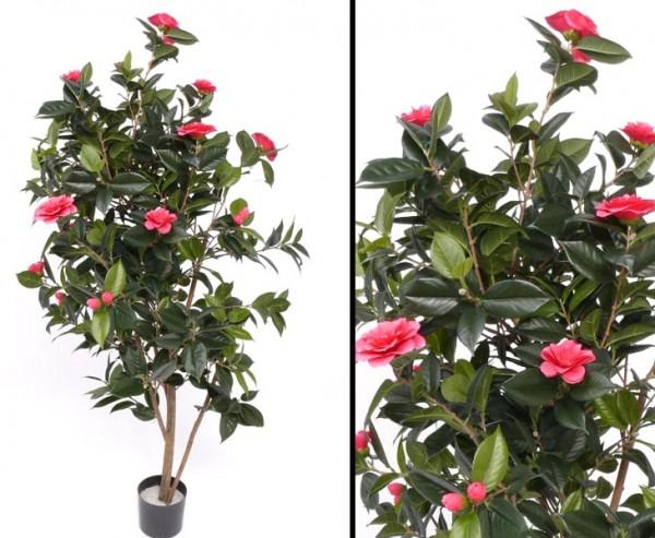 Kamelien- Camellia Japonica Baum mit 20 hellrosa Blüten Höhe ca.155cm