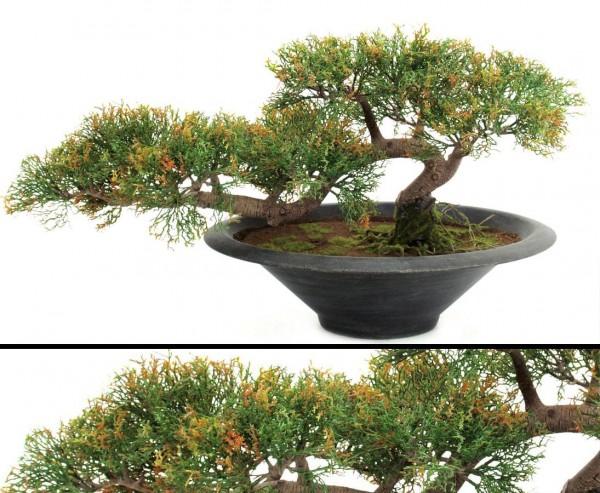 k nstlicher bonsai zeder in dekorativer schale hier bestellen. Black Bedroom Furniture Sets. Home Design Ideas
