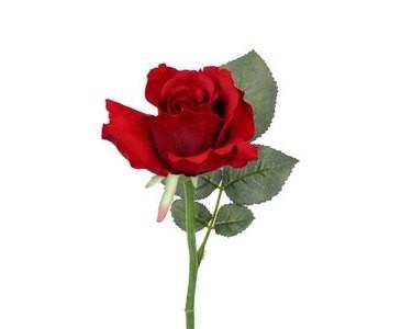 Rose, Seidenblume Alice, rötliche Blüte mit einem Durch. von 8cm