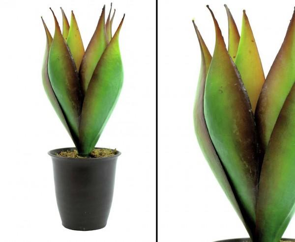 Lotus, Agave mit 8 Blättern, 34cm, Durchmesser ca. 25cm