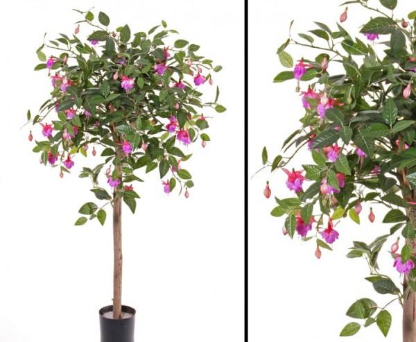 Fuchsie mit 666 Blätter und 126 Blüten violett Höhe ca. 90cm