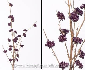 Purpur-Schönfrucht Callicarpa, 23 violette Beerenbündel, 99cm