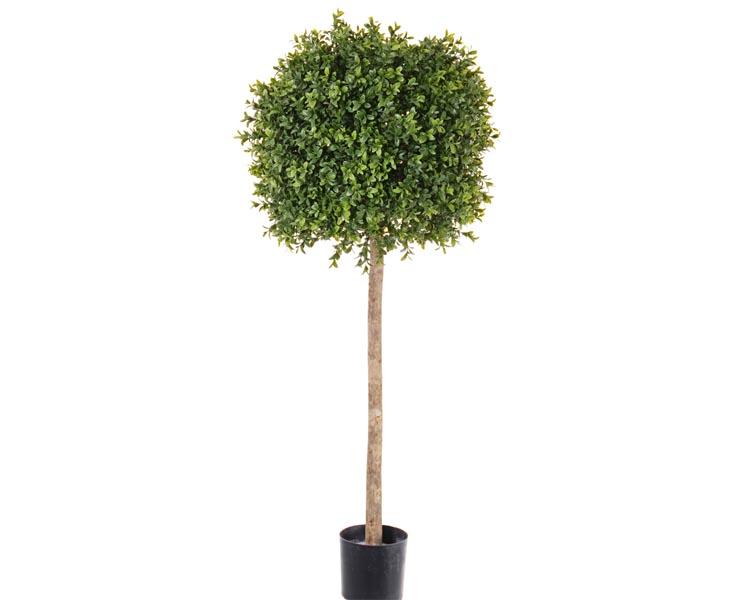 Buchsbaum-mit-ca1188-Blaettern-Hoehe-ca105cm-Durchmesser-38cm_4