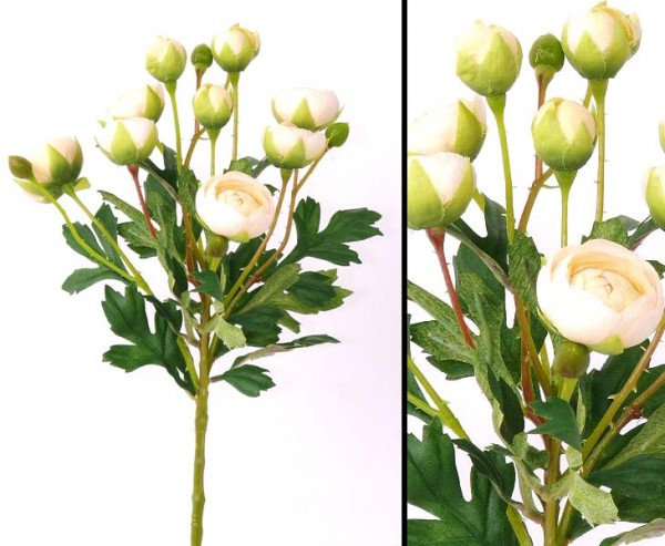Ranunkel Blumenstrauss mit 10 Blüten, creme farbig, Höhe 55cm