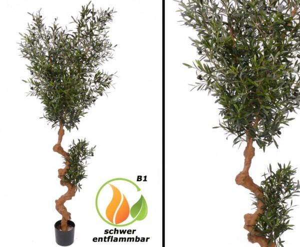 Olivenbaum B1 schwer entflammbar Echtstamm Höhe ca. 180cm