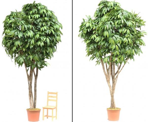 Kastanien Kunstbaum 400cm mit 3680 Blätter und Naturstämme im Topf