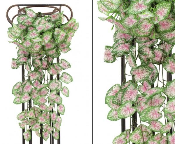 Kletterpflanze, Begonia Busch, dicht mit 180 Blätter, Höhe 60cm