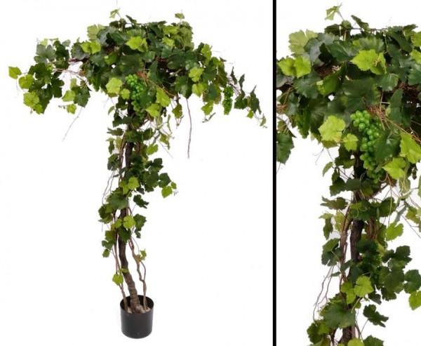 Weinstock, mit ca. 440 Blättern, 10 Traubenbündel, Höhe ca. 180cm