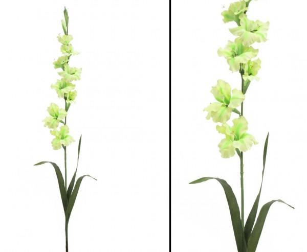 Gladiole, lemongrün