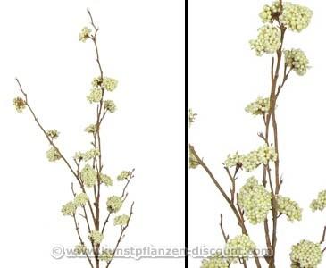 Schönfrucht Callicarpa, Beerenbündel cremefarbig, 99cm