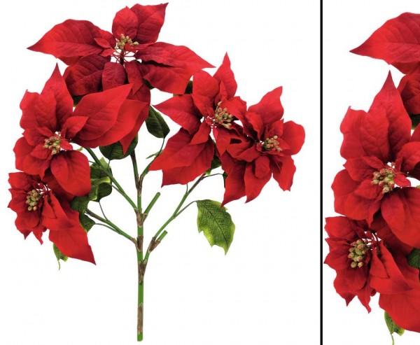 Weihnachtsstern Busch rot, Höhe 60cm