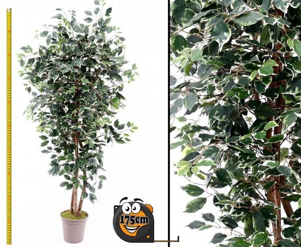 Kunstbaum Ficus 175cm mit grün-weiße Blätter Naturstämme