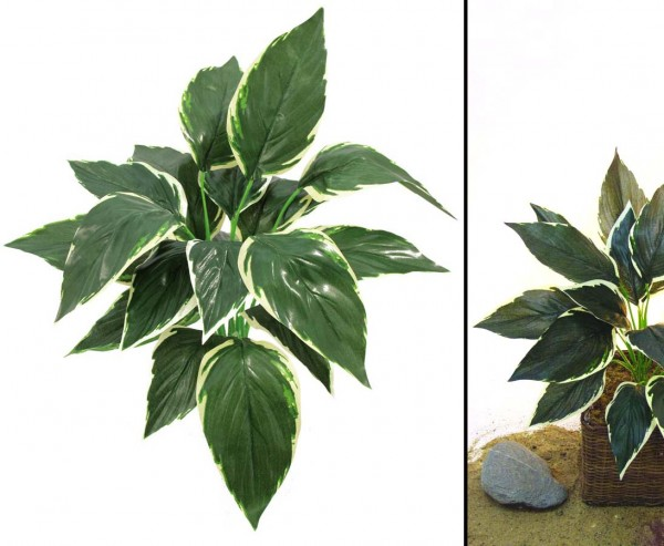 Hostapflanze, grün/weiß, 20 Blätter, Höhe 51cm