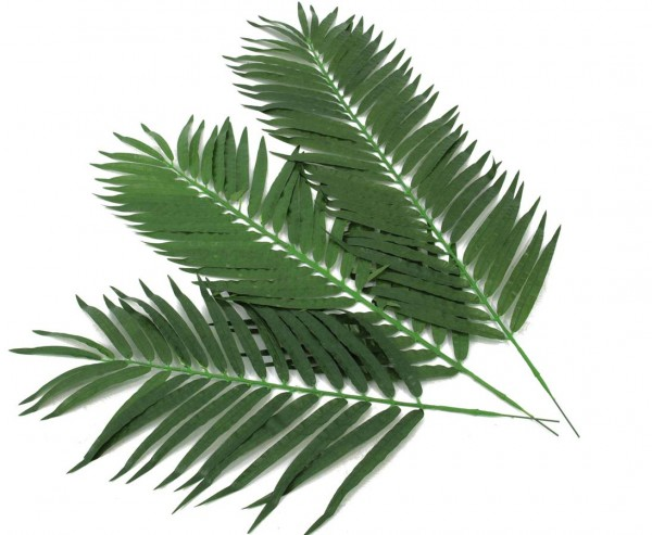 Kunstpflanzen Kocos Palmwedel Set mit 12 Stück Länge ca. 90cm