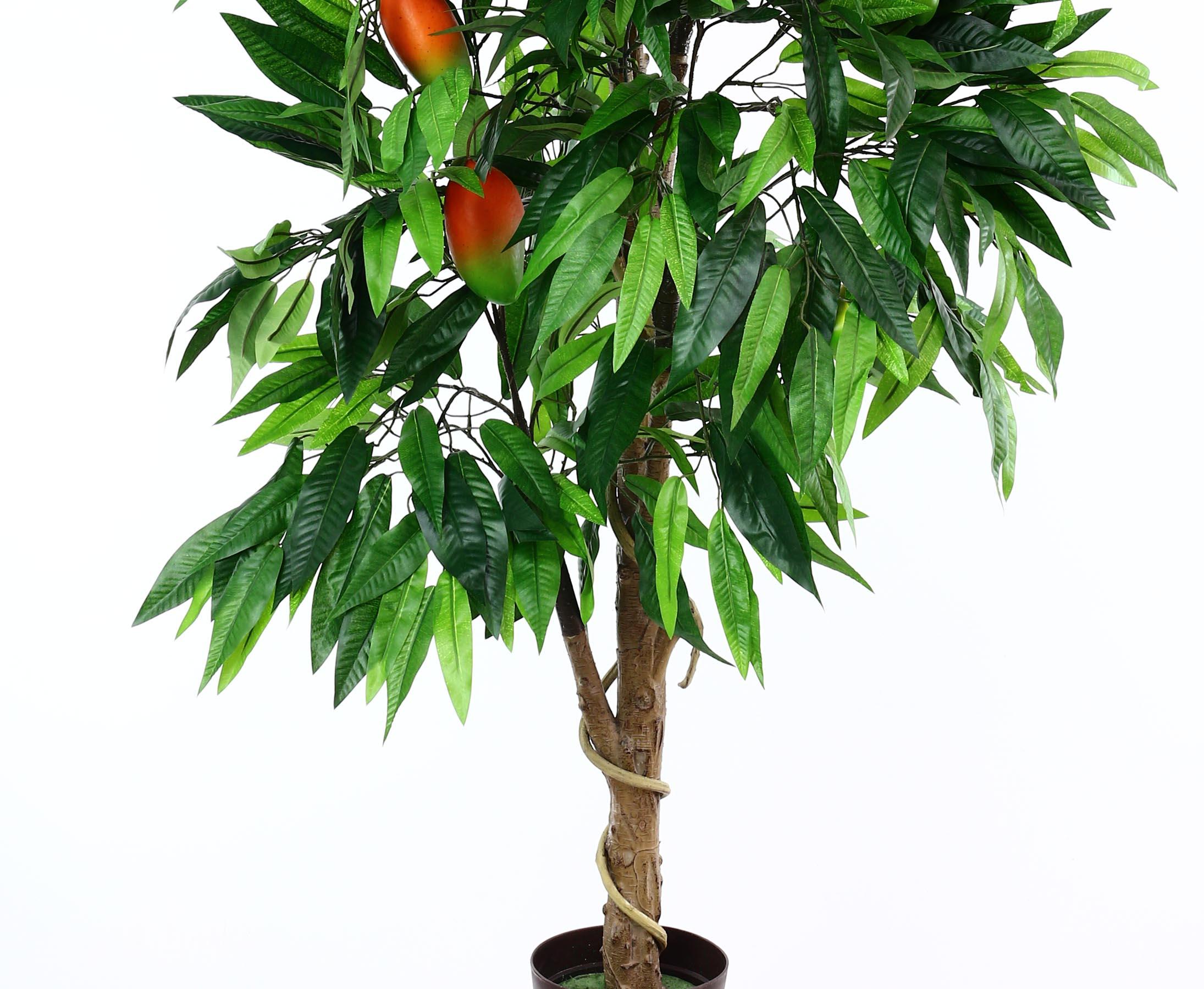 EUROPALMS Mangobaum mit Früchten 165cm