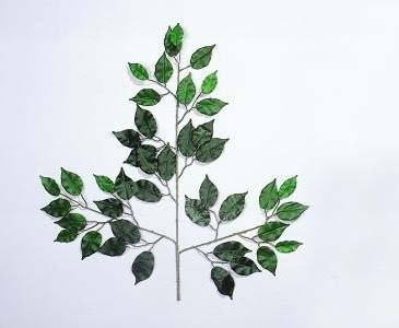 Ficus Zweige, Set mit 12 Zweigen und je 42 Blätter, Höhe 60cm