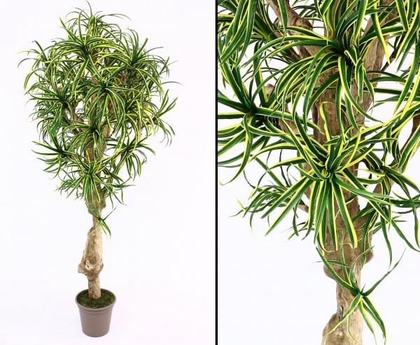 Dracena Yucca Kunstpalme mit 784 Blätter grün gelb 175cm hoch mit Naturstamm