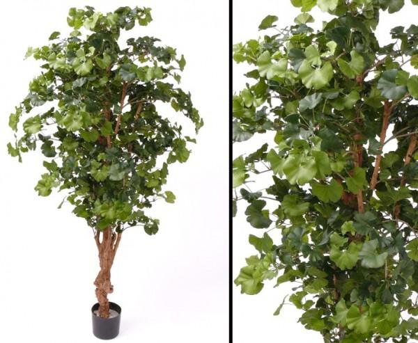 Ginkgo Sweet künstlich mit 1144 Blätter Höhe ca. 150cm