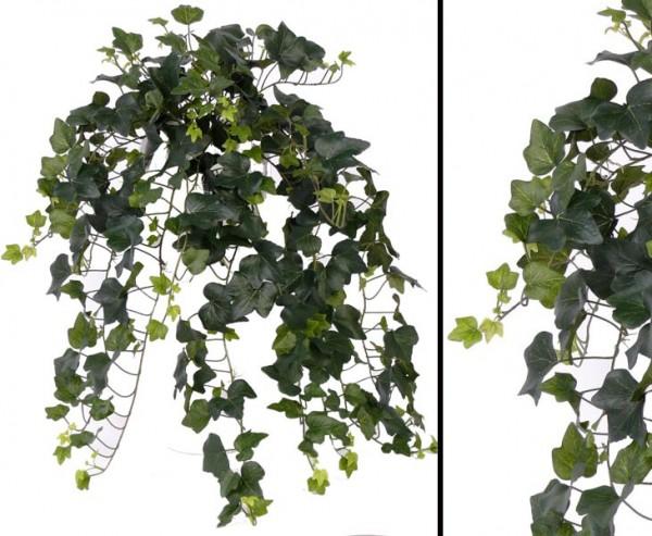 Hedera, Efeu Gala, mit 323 Blätter, ca. 75cm