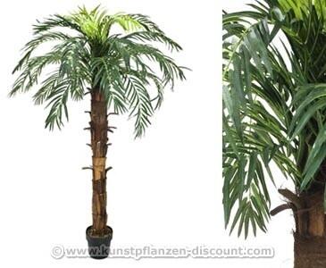 Kunstpflanzen Discount schöne cocos palme mit 160cm im kunstpalmen shop kaufen