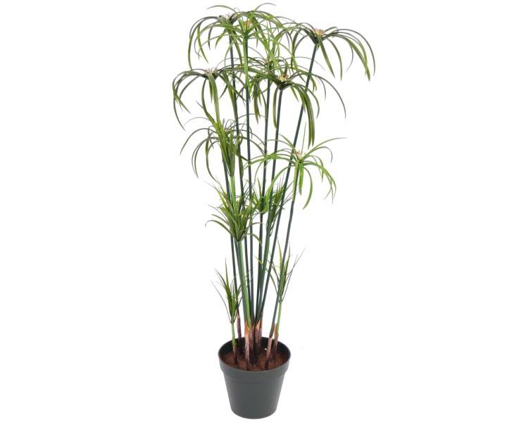 papyrus papyrus zimmerpflanze zyperngrasonline kaufen