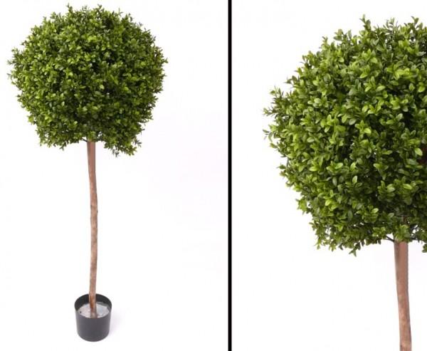 Buchsbaum mit ca.1728 Blättern Höhe ca. 140cm Durchmesser ca. 45cm