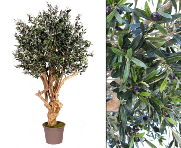 Oliven Kunstbaum mit dickem und verzweigtem Naturstamm 200cm Premium Qualität