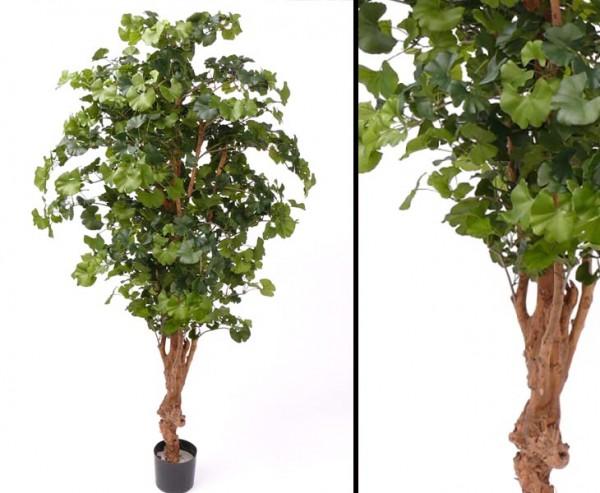Ginkgo Sweet Kunstbaum mit 1456 Blätter, Höhe ca 180cm