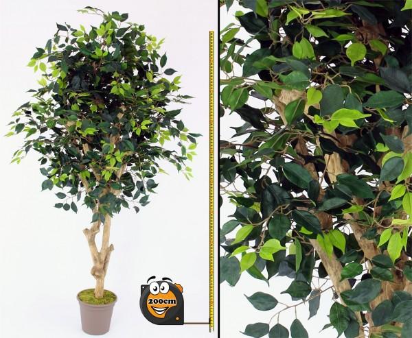 Kunstbaum Ficus Premium 200cm und Echtholzstamm mit Ästen