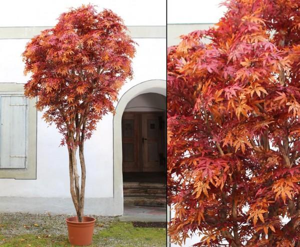 Ahorn Herbst Kunstbaum mit orange- rötlichen Blättern und Naturstämmen 400cm im Topf