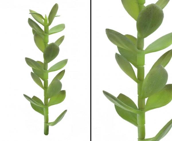 Geldbäumchen-Sproß künstlich 30cm hoch als Steckfpflanze