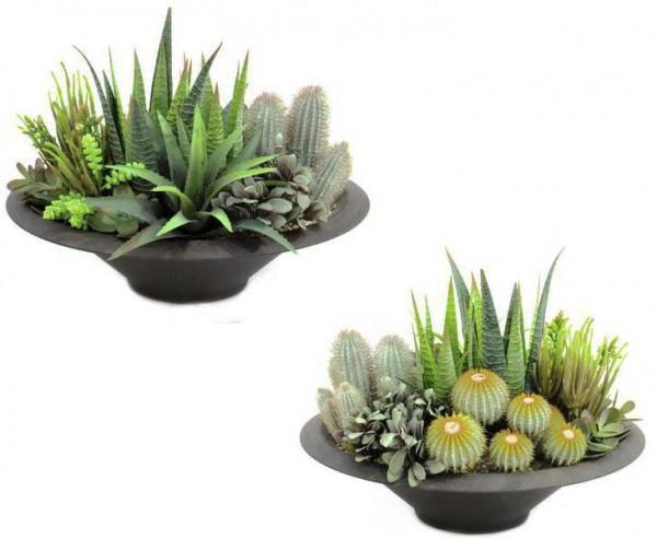 Kakuts Arrangement, mit 104 Blätter und Kakteen, in dekorativer Schale