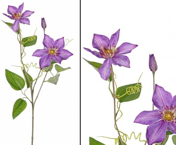 Waldreben Clematis mit 2 Blüten und 1 Knospe lila farbig Höhe 76cm