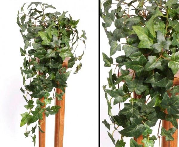 Efeu Ranke, Hedera helix telecurl, mit ca. 164 Blätter, Höhe ca. 60cm