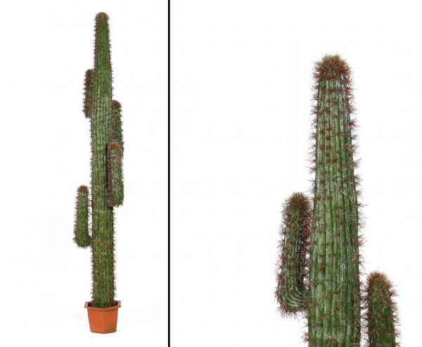Mexikanischer Kaktus, grün mit Topf, 230cm