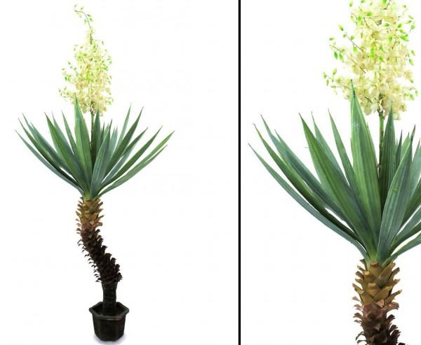 Yuccapalme mit 40 Kunststoffblätter und 121 Blütenknospen, Höhe ca. 222cm