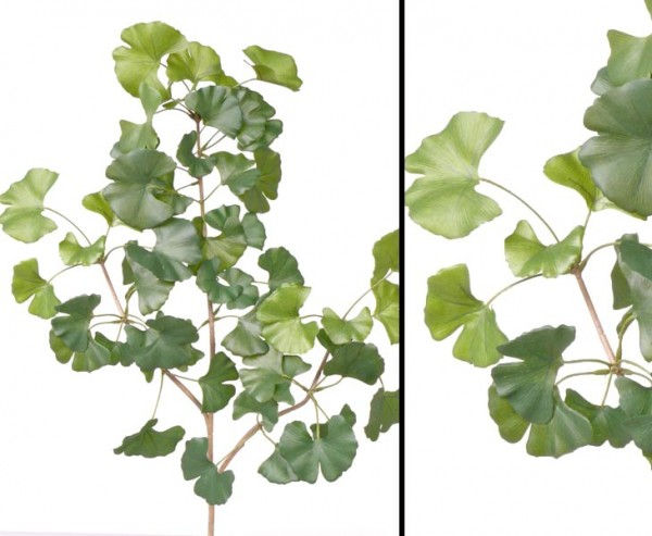 Sweet Gingko Zweig mit 48 Blätter, Länge 72cm