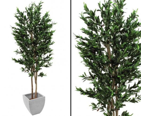 Olivenbaum, 2-stämmig, mit Oliven, 250cm