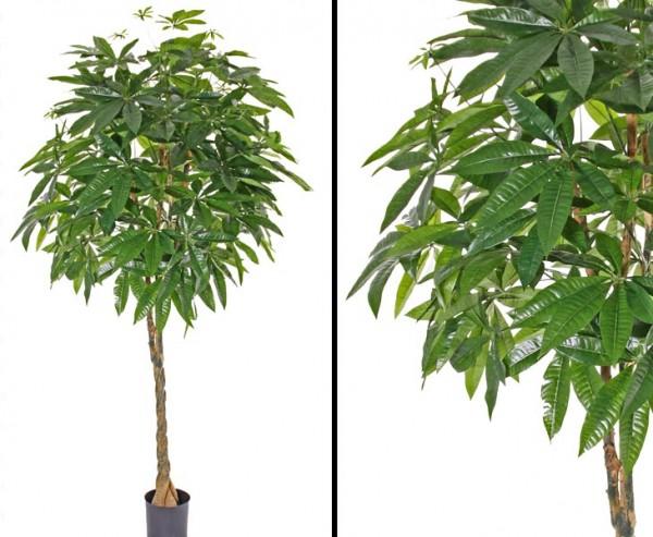 Kunstbaum Pachira gedrehter Stamm 667 Blättern 180cm