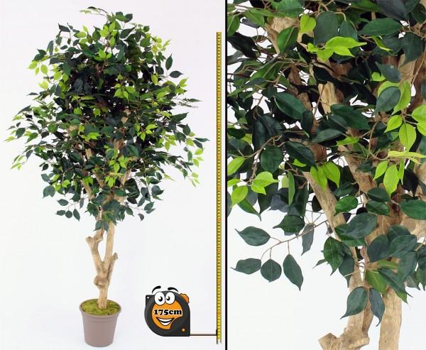 Ficus Kunstbaum Premium 175cm Echtholzstamm mit Ästen
