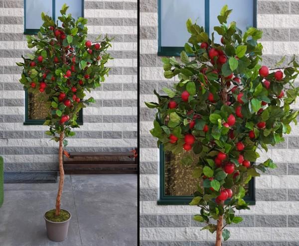 Apfelbaum mit 144 roten Früchten und Naturstamm Höhe 280cm