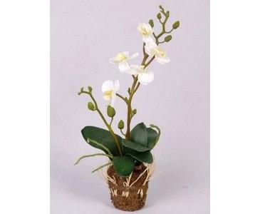 Orchidee künstlich mit 5 cremefarbigen Blüten und 7 Blättern Höhe ca. 32cm