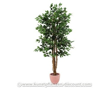 Ficus Benjamini Kunstbaum mit 3 Naturstämmen, 1260 Blätter, Höhe 210cm