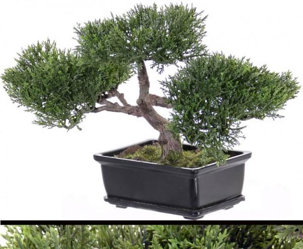 Bonsai Ceder, ca.113 Blätter mit Schale, ca 23cm