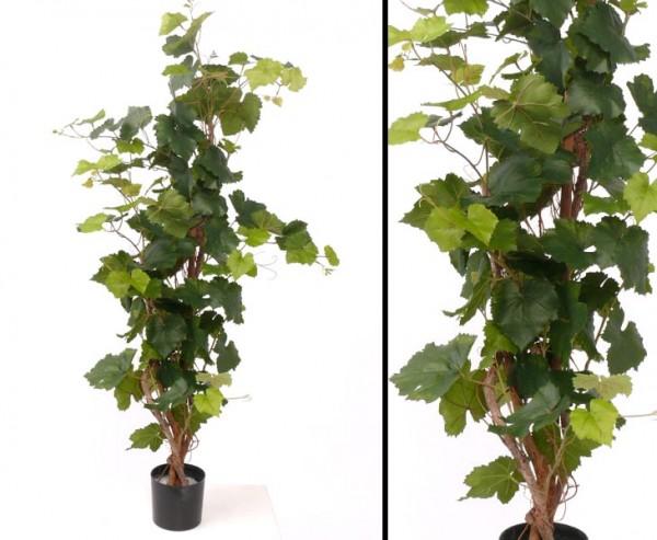 Traubenpflanze, mit ca. 136 Blätter, Höhe ca. 120cm