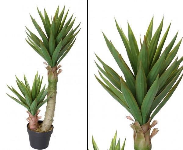 Aloe Ferox mit 54 Blättern Höhe ca. 90cm im Plastiktopf