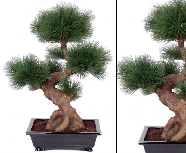 Künstlicher Bonsai Baum mit 80 Nadel Bündel in schwarzer Schale Höhe ca. 75cm