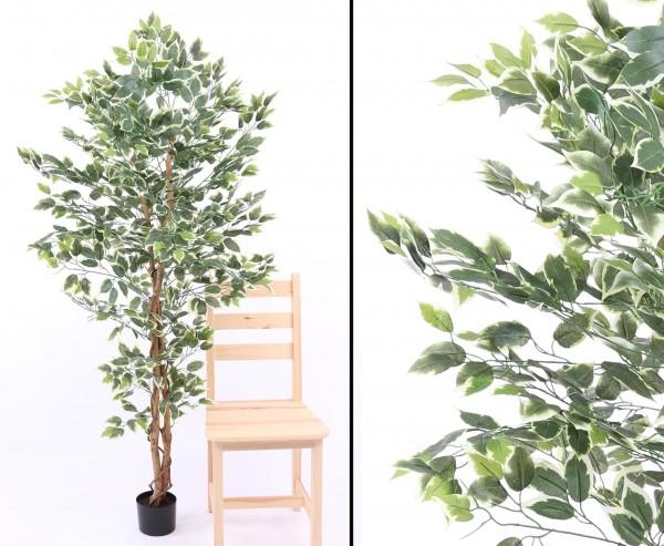 Kunstbaum Ficus grün-weiss 1008 Blätter Höhe 180cm